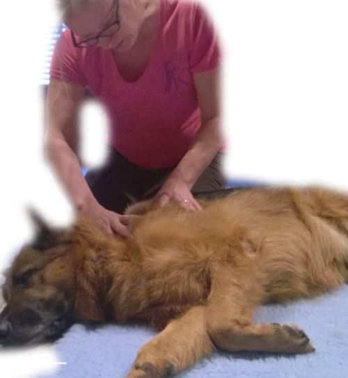 Canine Deep Tissue Massage