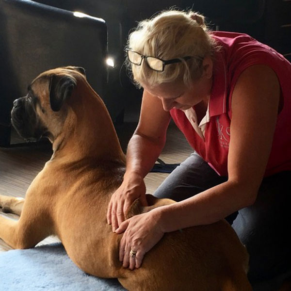Information for Vets - Canine Massage Therapy